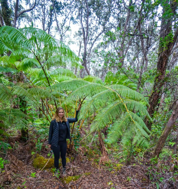 Biggest fern ever at Kilauea Iki Trailhead