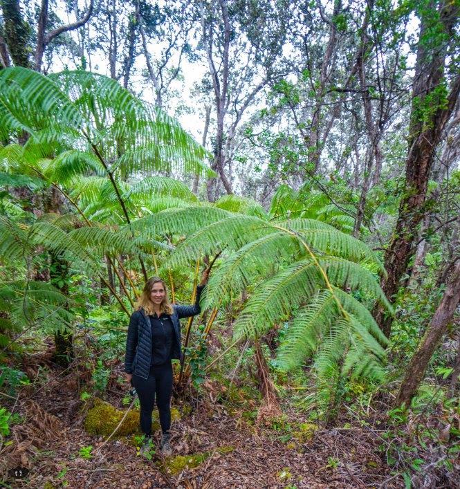 Biggest fern ever at Kilauea Iki Trailhead