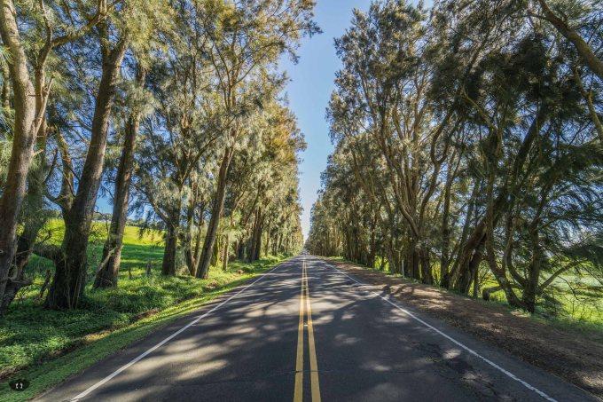 Kohala Mountain Road