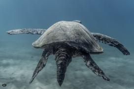 Featured_UnderwaterMauiGallery