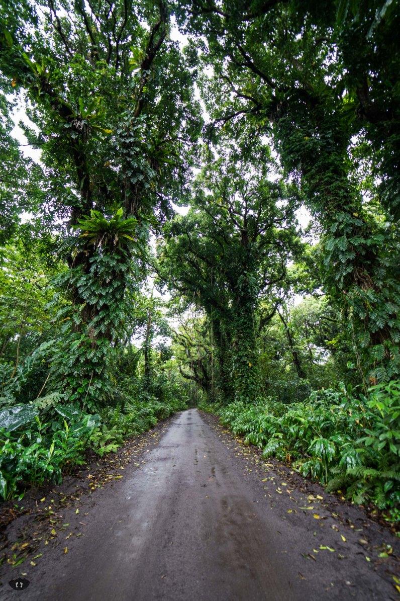 Puna Coast Road