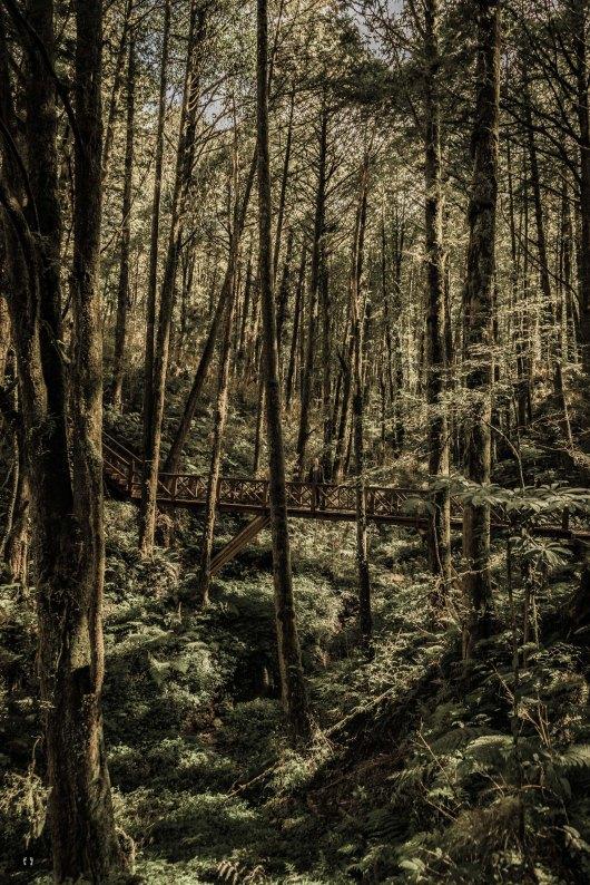 Tashan Trail, Alishan