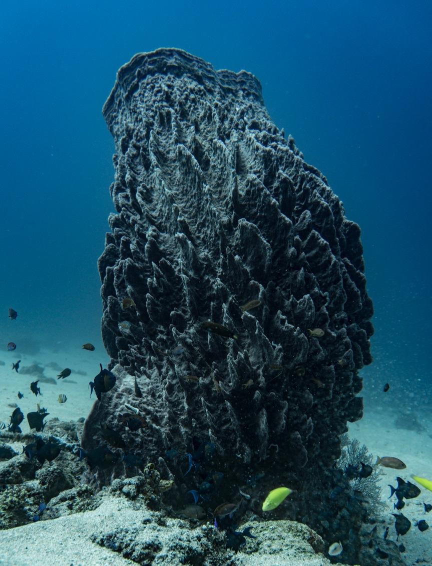 Huge Sponge