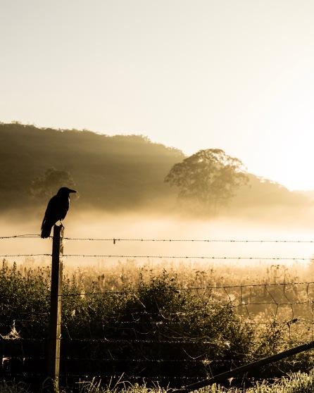 Sunrise at Kangaroo Valley
